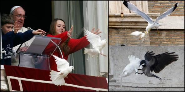 Aves-atacan-a-palomas-de-la-paz