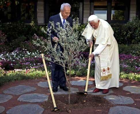 Si nos remontamos a 2009, en su visita a Tierra Santa, el Papa y Simón Peres, plantaron en la residencia del presidente israelí un olivo como símbolo de la paz.