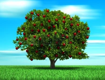 arbol-con-frutos-